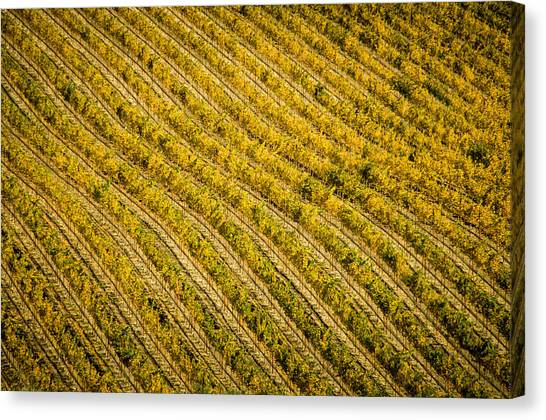 Fall Color Grape Vines Canvas Print by Connie Cooper-Edwards