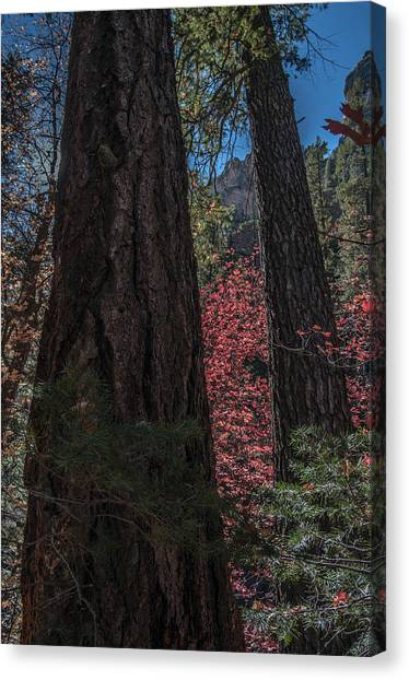 West Fork Perspective Canvas Print