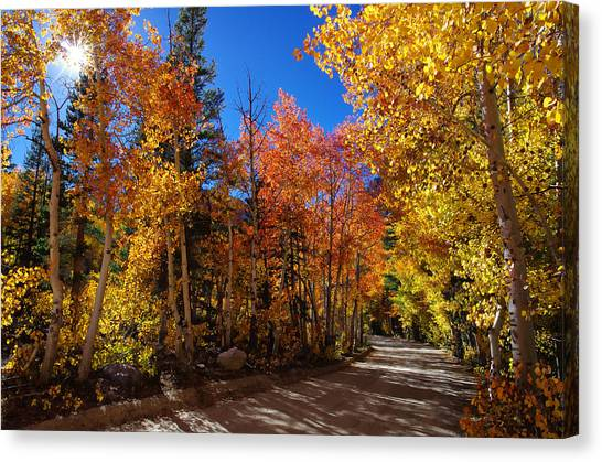 Bishops Canvas Print - Fall Color Sunburst by Scott McGuire