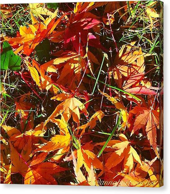 Autumn Leaves Canvas Print - Fall Colors In Annasgardens by Anna Porter