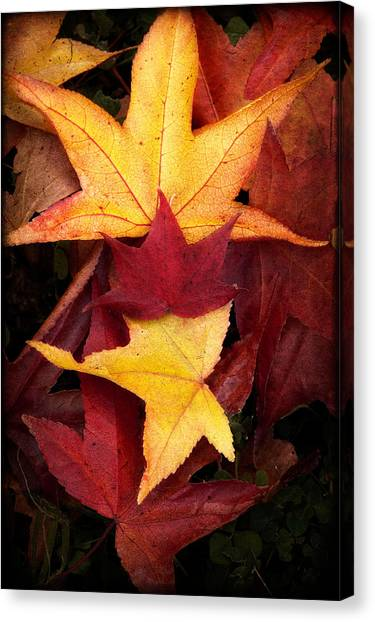 Fall Colors Canvas Print by Bobbi Feasel