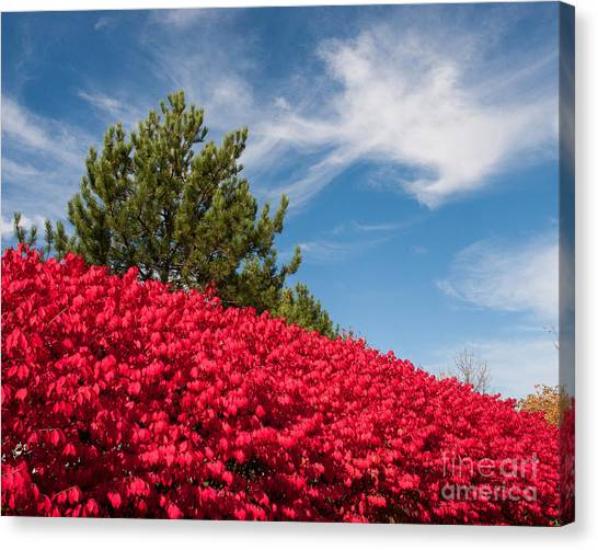 Fall Colors Canvas Print