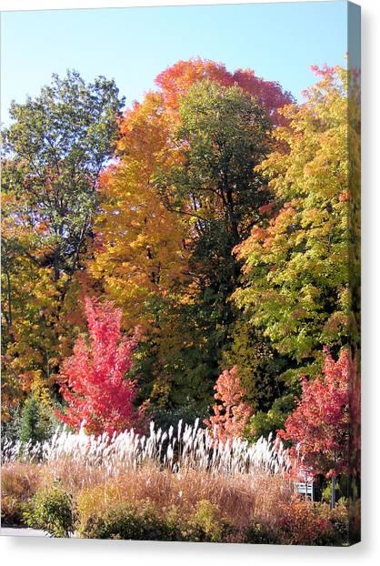 Fall Colors Canvas Print by Gaetano Salerno