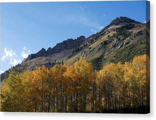Fall Colors In The Sierra Nevada Canvas Print