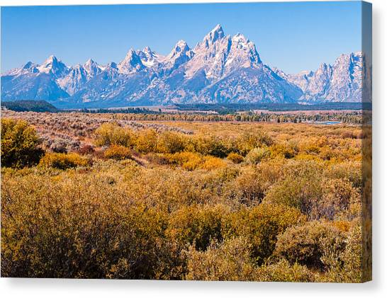 Fall Colors In The Tetons   Canvas Print