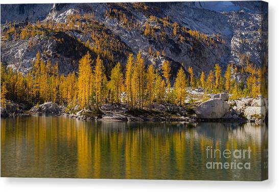 Larch Canvas Print - Fall Colors Larches Reflection by Mike Reid