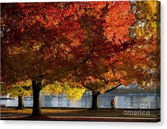 Fall Colour In Stanley Park Canvas Print