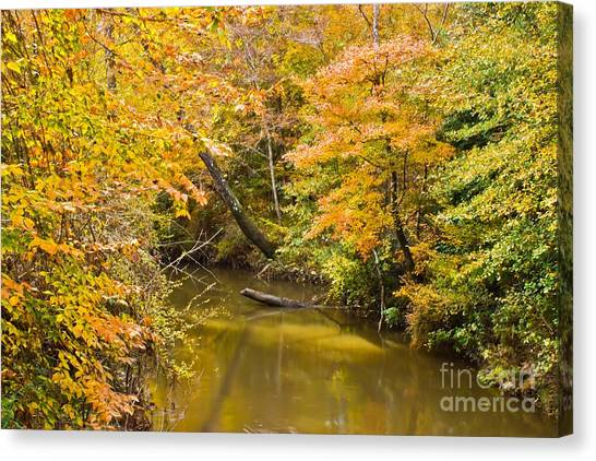 Fall Creek Foliage Canvas Print
