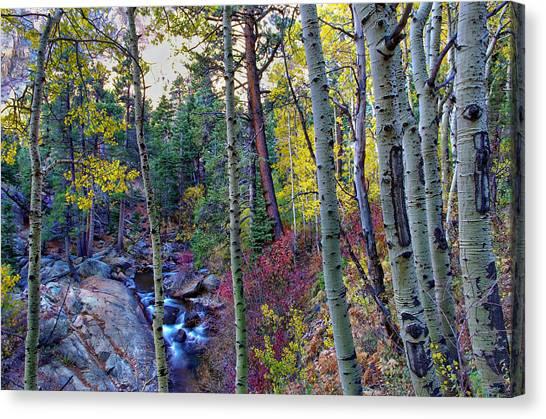 Fall Creek Canvas Print