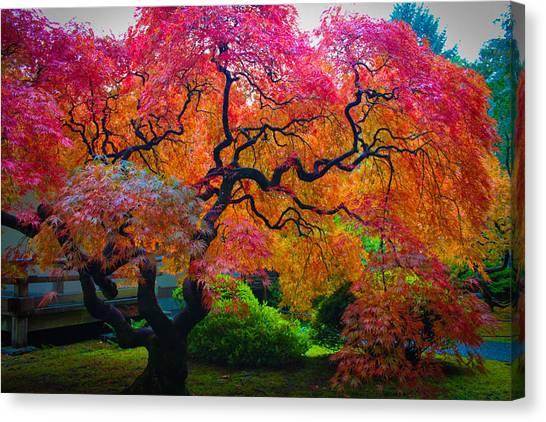 Fall Crowning Glory  Canvas Print
