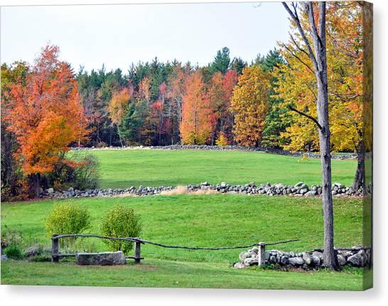 Fall Foliage 6 Canvas Print