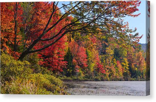 Fall Foliage At Elbow Pond Canvas Print