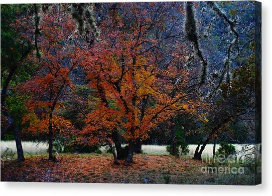 Fall Foliage At Lost Maples State Park  Canvas Print