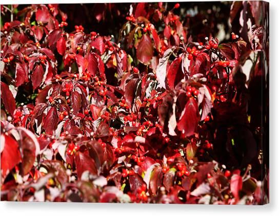 Fall Foliage Colors 08 Canvas Print