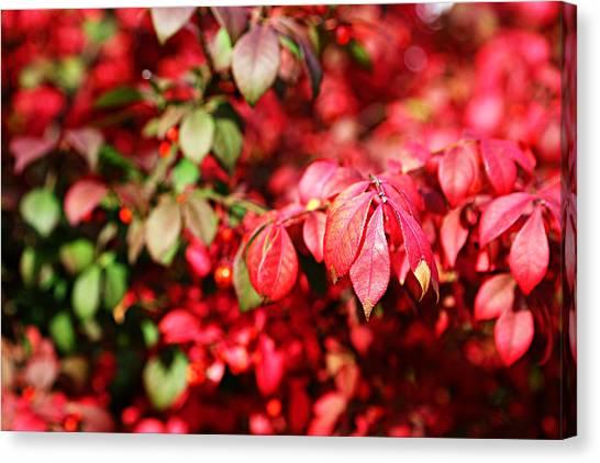Fall Foliage Colors 10 Canvas Print