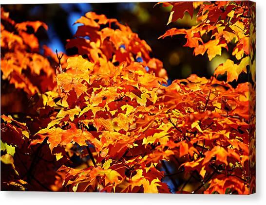 Fall Foliage Colors 16 Canvas Print