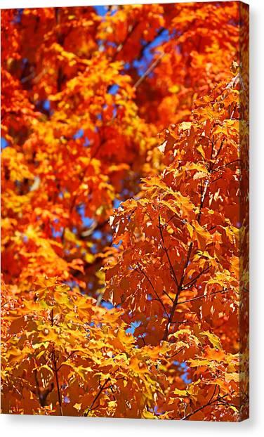 Fall Foliage Colors 17 Canvas Print