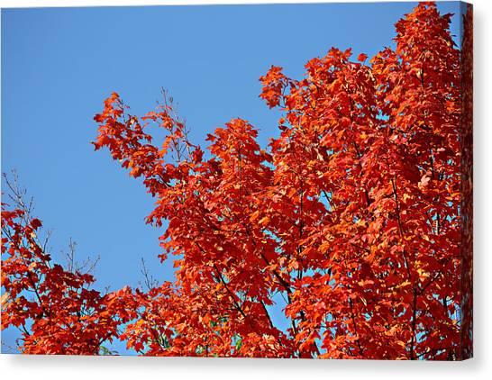 Fall Foliage Colors 20 Canvas Print
