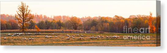 Fall Graze Canvas Print
