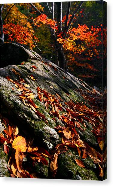 Fall In Gyeryongsan Canvas Print