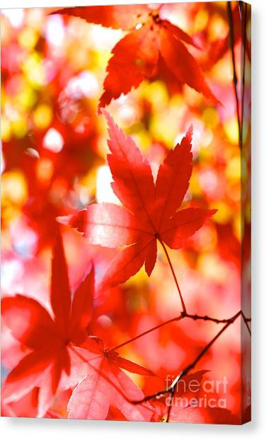 Fall In Love Again Canvas Print