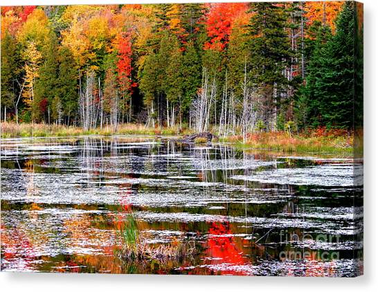 Fall In Maine Canvas Print by Arie Arik Chen
