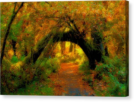 Fall In Olympia National Forest Canvas Print