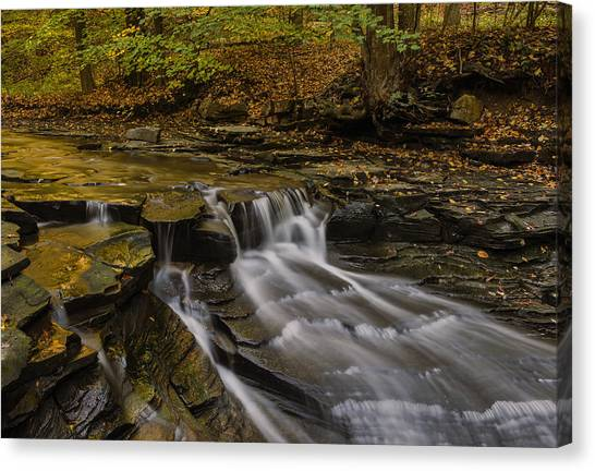 Fall In The Metroparks Canvas Print