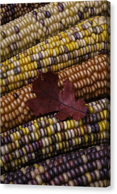 Indian Corn Canvas Print - Fall Indian Corn With Leaf by Garry Gay