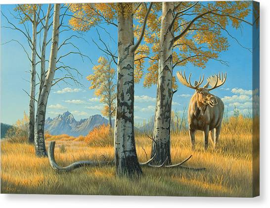Moose Canvas Print - Fall Landscape - Moose by Paul Krapf