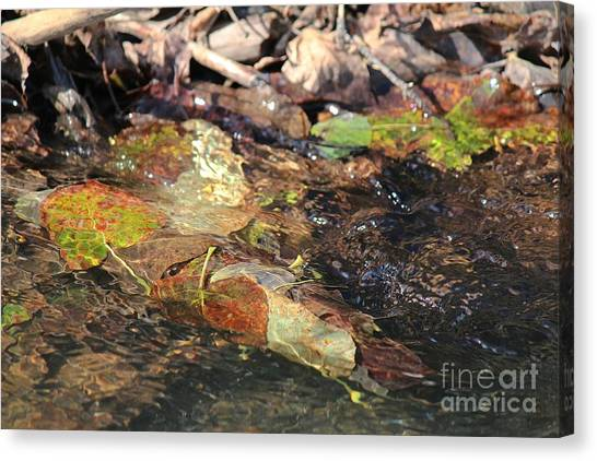 Canvas Print featuring the photograph Fall Leaves by Ann E Robson