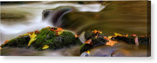 Fall Leaves On Mossy Rocks Canvas Print by Greg Mimbs