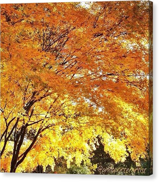 Orange Tree Canvas Print - Fall Maple Afternoon Light by Anna Porter