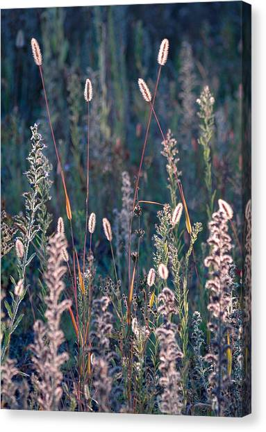 Fall Meadow Backlit Canvas Print