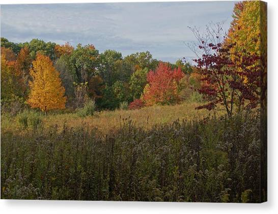 Fall Meadow Canvas Print by Doug Hubbard