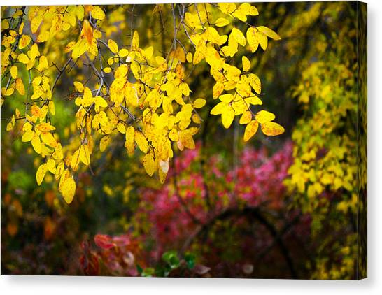 Fall Medley Canvas Print