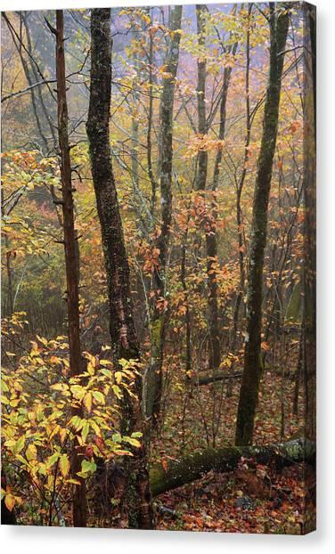 North Carolina Canvas Print - Fall Mist by Chad Dutson