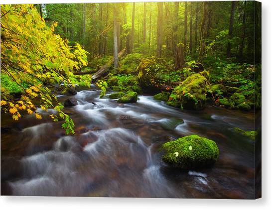Mossy Forest Canvas Print - Fall Morning Hike by Darren  White