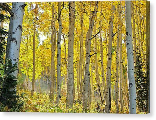 Fall Morning Shine Canvas Print