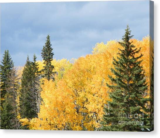 Canvas Print featuring the photograph Fall Near Ya Ha Tinda by Ann E Robson