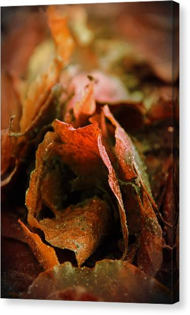 Fall Canvas Print by Odd Jeppesen