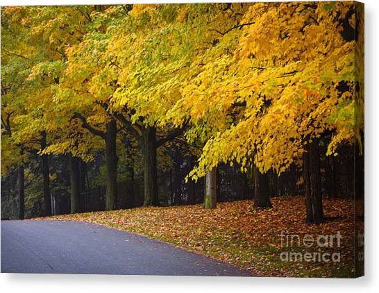 Toronto Maple Leafs Canvas Print - Fall Road And Trees by Elena Elisseeva