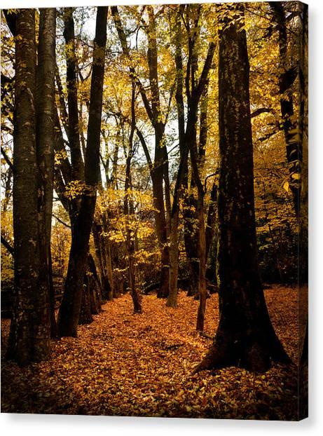 Fall Scene In Bidwell Park Canvas Print