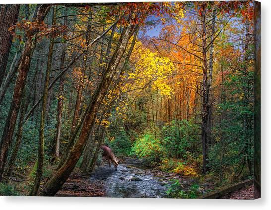 Fall Solitude Canvas Print