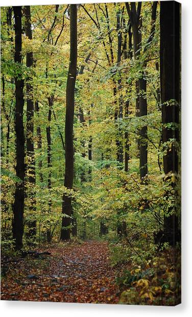 Haverford Canvas Print - Fall Trail by Judy Gallagher