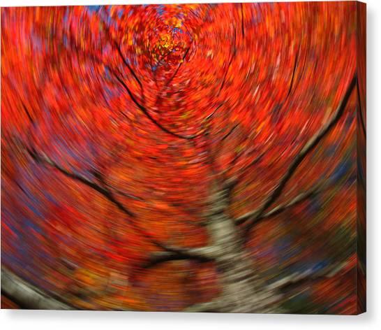 Fall Tree Carousel Canvas Print