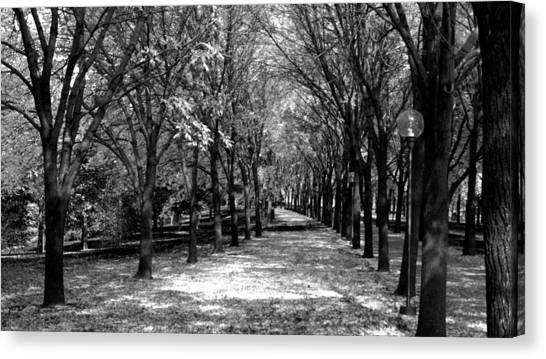 Fall Tree Promenade Landscape Canvas Print