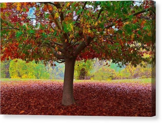 Fall Tree View Canvas Print