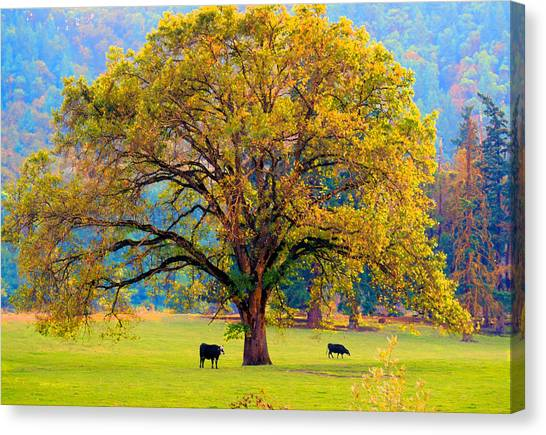 Fall Tree With Two Cows Canvas Print