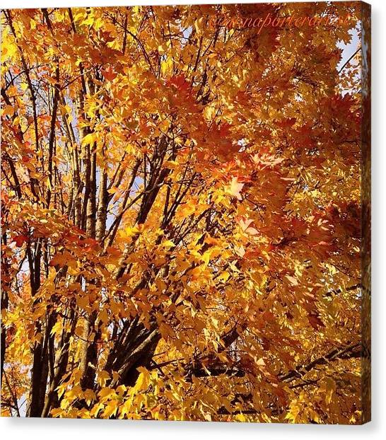 Autumn Leaves Canvas Print - Fall Trees II by Anna Porter